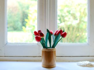 Pilzbefall am Holzfenster